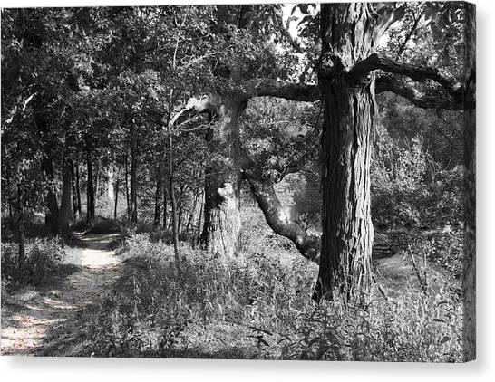 Parkland Trail Canvas Print