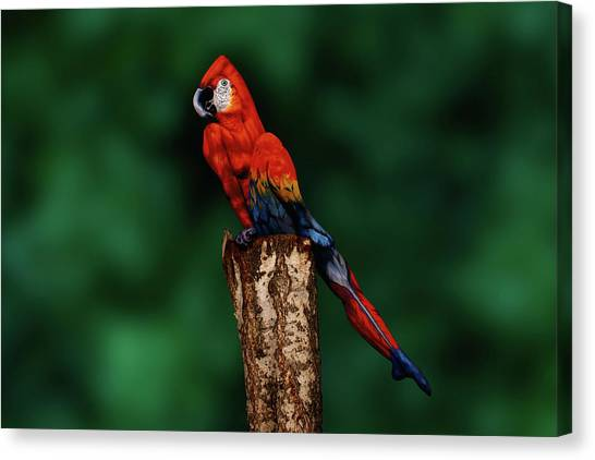 Parrot Bodypainting Illusion Canvas Print by Johannes Stoetter