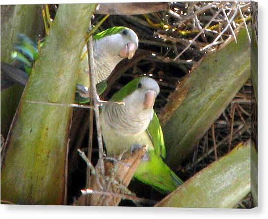Parrot Pair Canvas Print