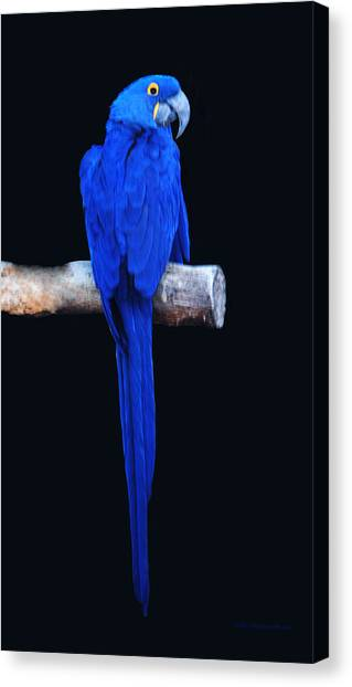 Parrot Perfection Canvas Print by DiDi Higginbotham