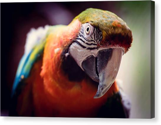 Parrot Canvas Print - Parrot Selfie by Fbmovercrafts