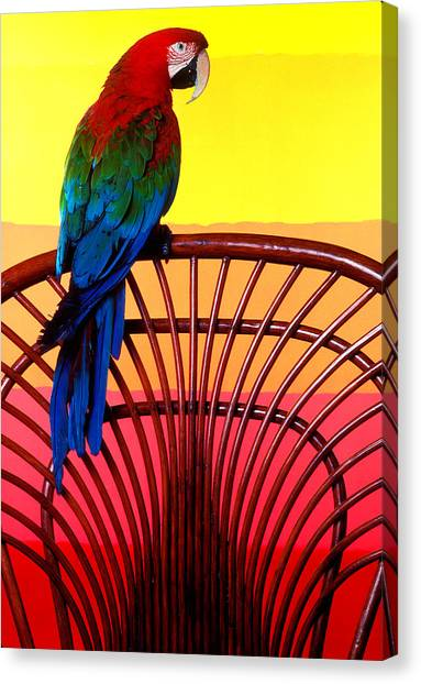 Parrots Canvas Print - Parrot Sitting On Chair by Garry Gay