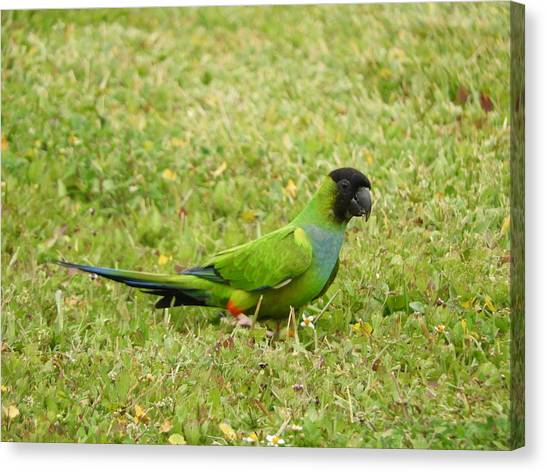 Canvas Print - Parroting Green by Red Cross