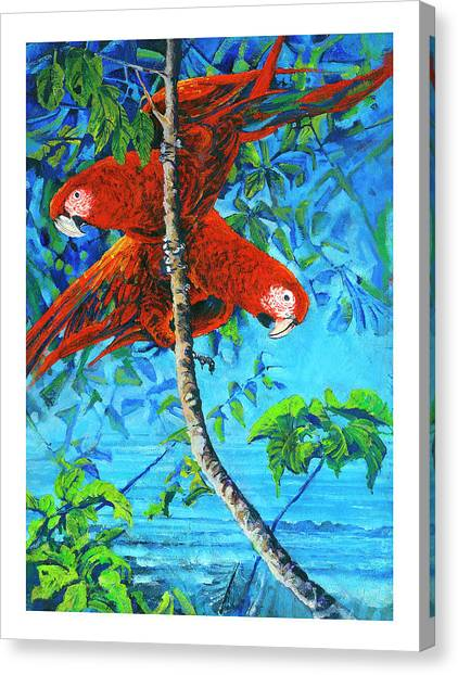 Parrots In Canopy Above Canvas Print