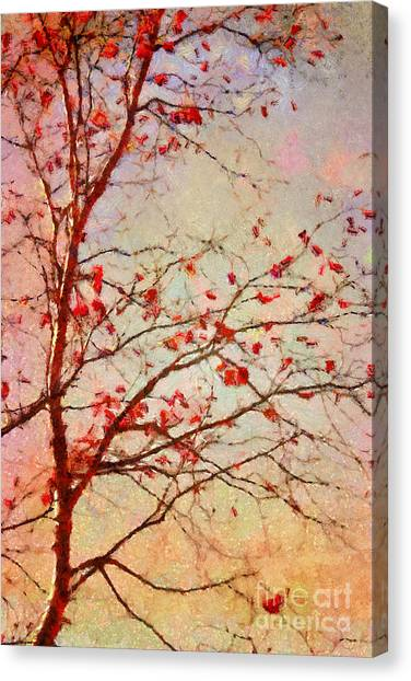 Orange Tree Canvas Print - Parsi-parla - D04c03t01 by Variance Collections