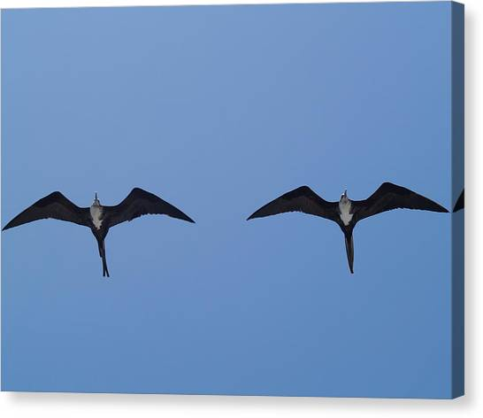Partners In Flight Canvas Print by Richard Mansfield