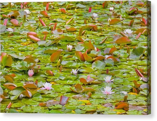 Oyama Canvas Print - Party At Kaloya Pond by Darrel Giesbrecht