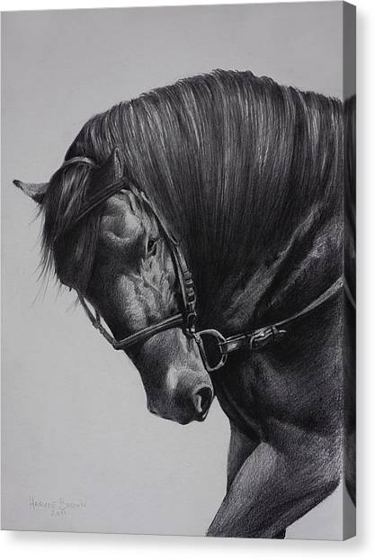Bridle Canvas Print - Paso Fino by Harvie Brown