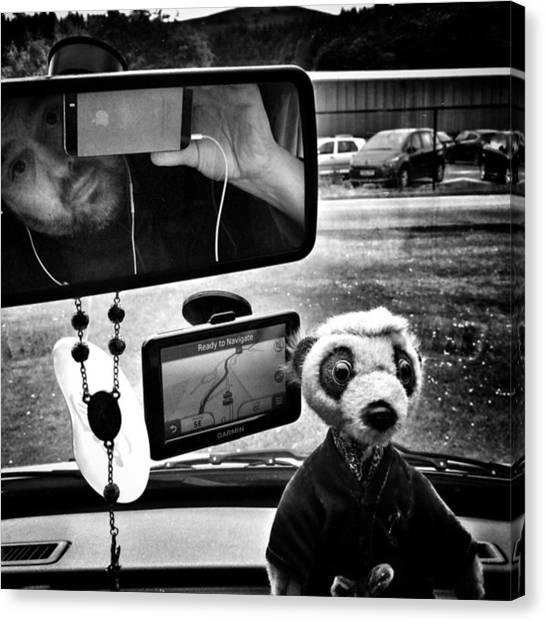 Meerkats Canvas Print - Passengers by Adam Slater