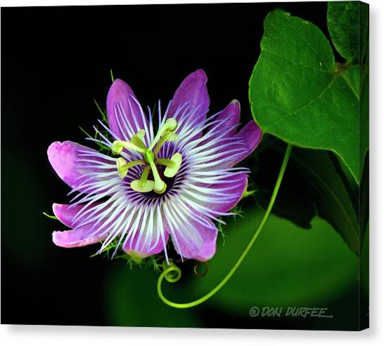 Canvas Print - Passion by Don Durfee