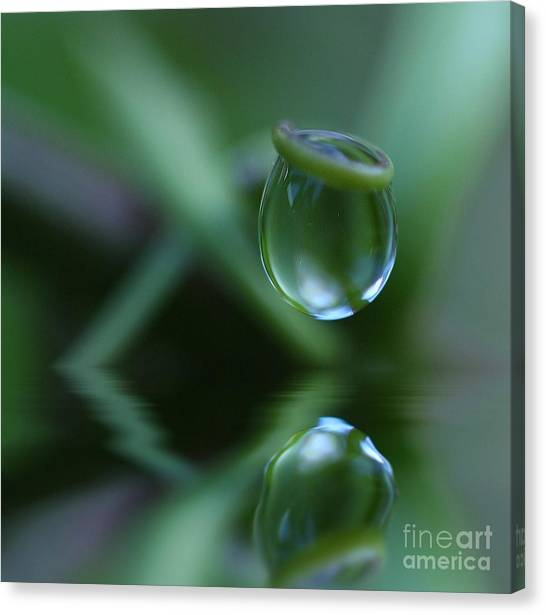 Passion Drop Canvas Print