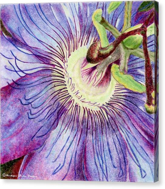 Passion Flower Canvas Print by Robynne Hardison
