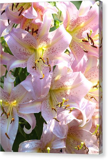 Passionate Pink Canvas Print by Kim