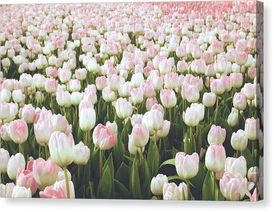 Easter Canvas Print - Pastel Pink Tulips- Art By Linda Woods by Linda Woods