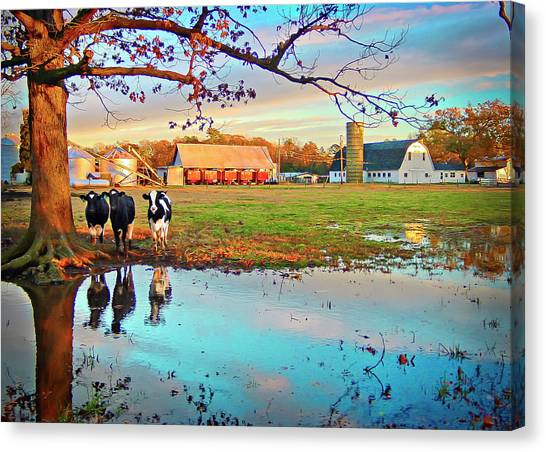 Canvas Print featuring the photograph Pasture At Bacon's Castle by Williams-Cairns Photography LLC