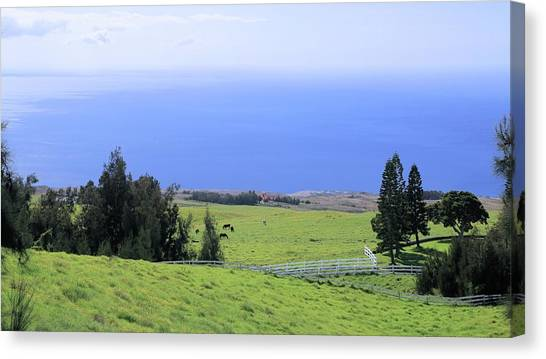 Pasture By The Ocean Canvas Print
