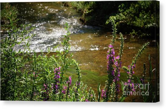 Canvas Print featuring the photograph Pasture Upstream by Cj Mainor