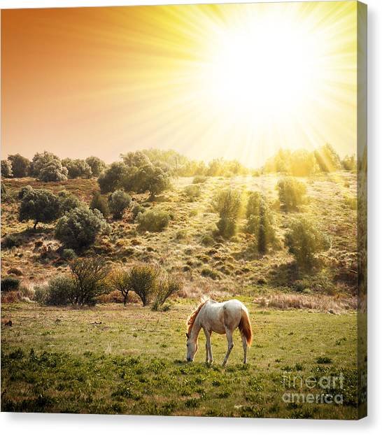 Beautiful Sunrise Canvas Print - Pasturing Horse by Carlos Caetano
