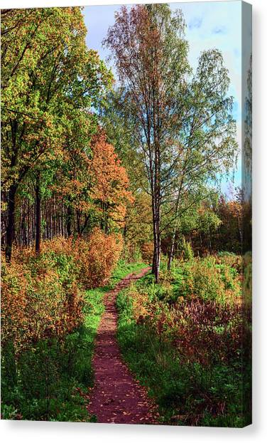 path in a beautiful country Park on a Sunny autumn day Canvas Print