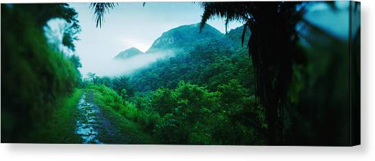 Cloud Forests Canvas Print - Path In A Rainforest, Cayo District by Panoramic Images