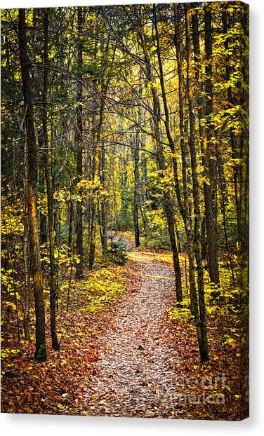Path Canvas Print - Path In Fall Forest by Elena Elisseeva