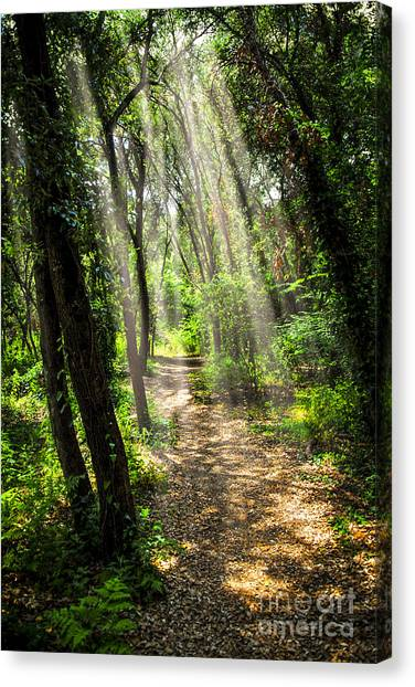 Forest Paths Canvas Print - Path In Sunlit Forest by Elena Elisseeva
