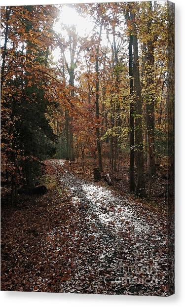 Path In The Autumn Color Canvas Print by Hideaki Sakurai