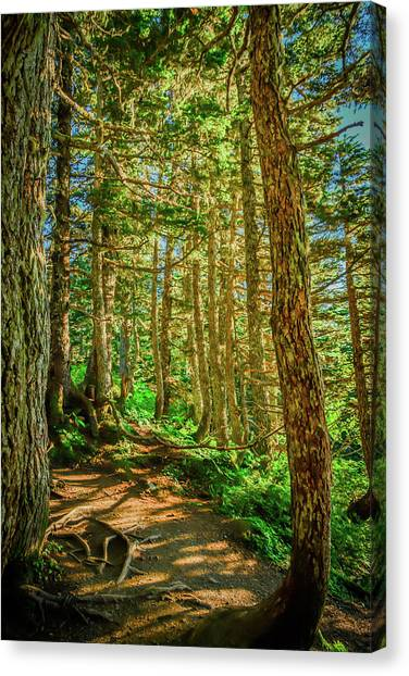 Path In The Trees Canvas Print