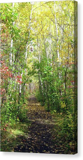 Path In The Woods 3 Canvas Print