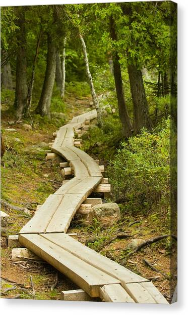 Path Into Unknown Canvas Print