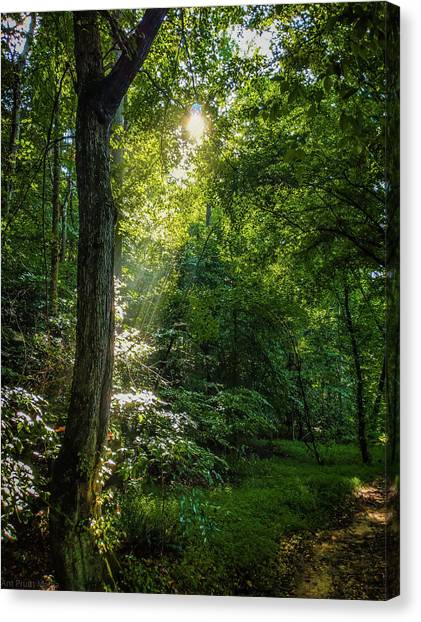 Path Lighting Canvas Print