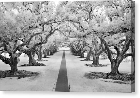 Path Of Dreams  Canvas Print