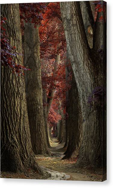 Forest Paths Canvas Print - Path Of The Snake by Martin Podt