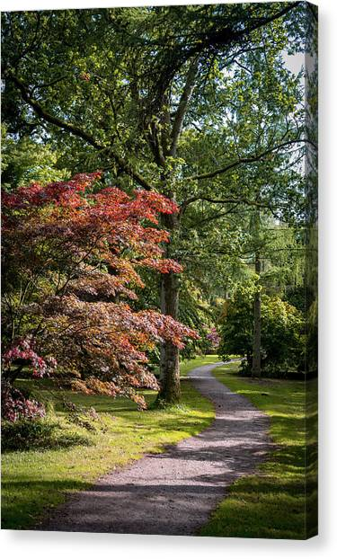 Canvas Print featuring the photograph Path Through Autumn Forest by Scott Lyons