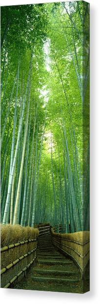 Forest Paths Canvas Print - Path Through Bamboo Forest Kyoto Japan by Panoramic Images
