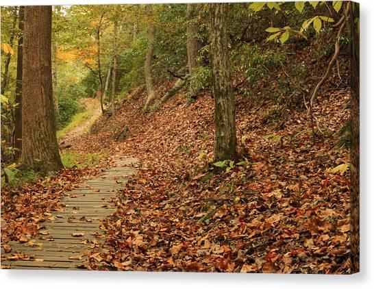 Path To Autumn Canvas Print