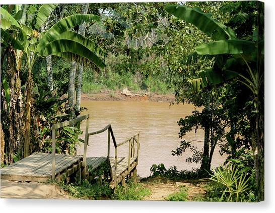 Path To The Amazon River Canvas Print