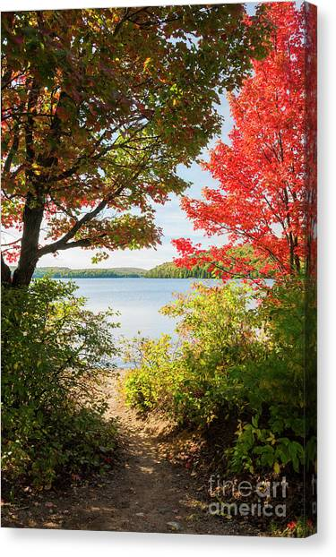 Algonquin Park Canvas Print - Path To The Lake by Elena Elisseeva