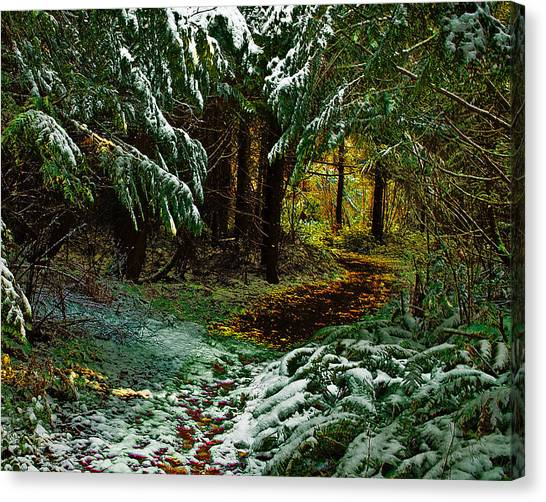 Path To The Light Canvas Print by Wilbur Young