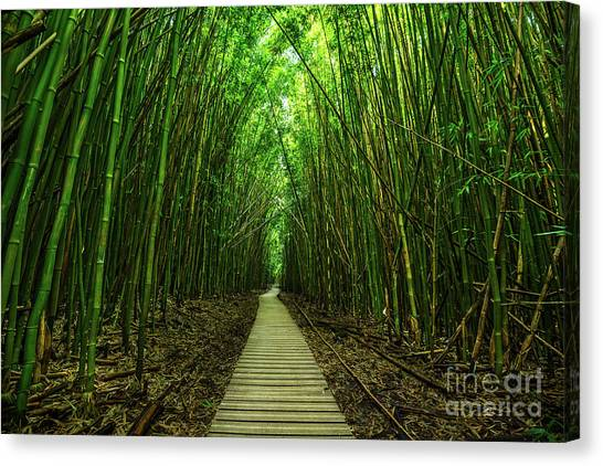Trees Canvas Print - Path To Zen by Jamie Pham