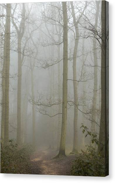 Early Spring Canvas Print - Pathway by Chris Dale