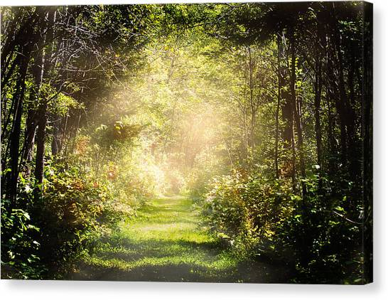Pathway Canvas Print by Gary Smith