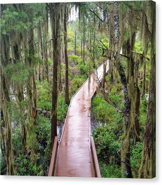 Okefenokee Canvas Print - Pathway Through The Swamp Via The by Karen Breeze