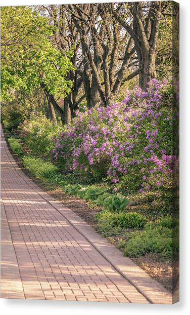 Pathway To Beauty In Lombard Canvas Print