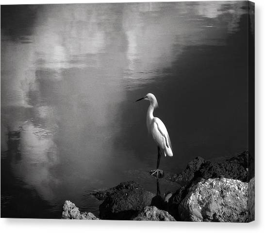 Patience In Black And White Canvas Print