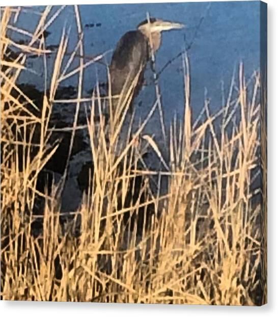 Herons Canvas Print - Patience #magic #imagine #possiblities by John Repoza