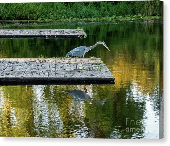 University Of Washington Canvas Print - Patience Of A Heron by As the Dinosaur Flies Photography