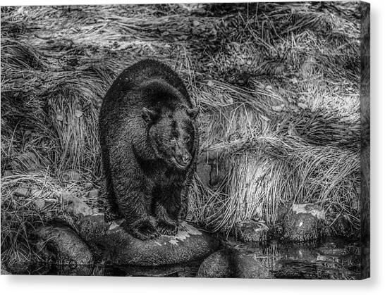Patient Black Bear Canvas Print