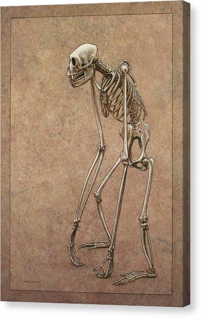 Primates Canvas Print - Patient by James W Johnson