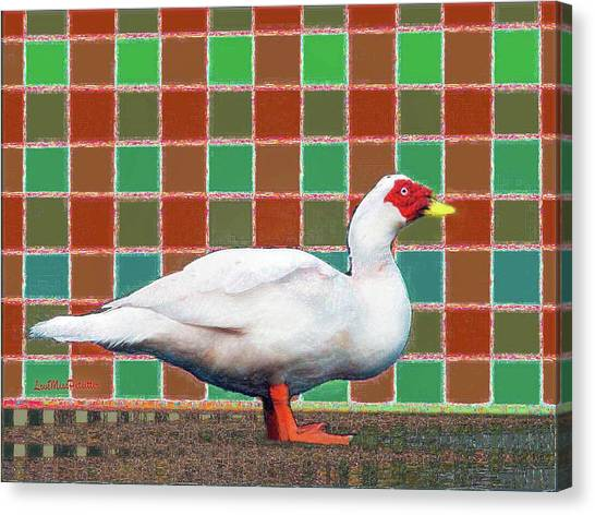Pato Art 4 Canvas Print